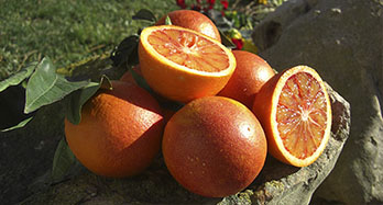 Blood Oranges 15Kg